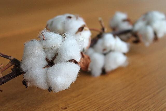 Clases de algodon que existen