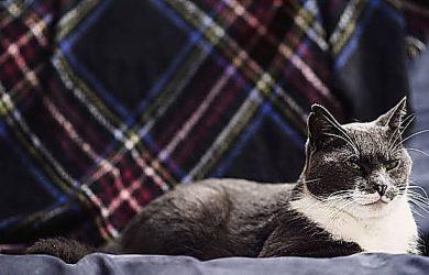 Top 3 Telas Para Gatos, Tipos De Telas Y Clases De Tapizados
